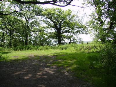 UK trees